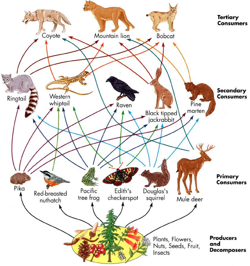 food chains and food webs Food chains and food webs break down dead plants and animals  bacteria and fungi are two examples reduces dead organisms to simpler forms  of.