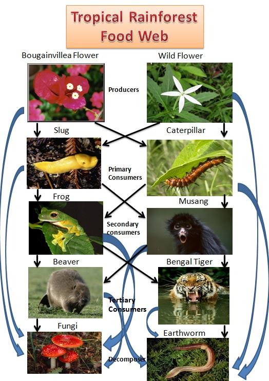 tropical rainforest wiki
