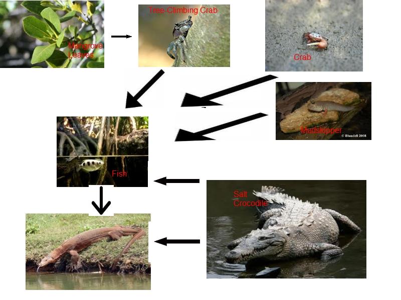 Apassionforscience 1e3 2012 Group 7 Tropical Rainforest