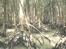 apassionforscience / 1E3_2012 Group 7 - Tropical Rainforest  apassionforscie...