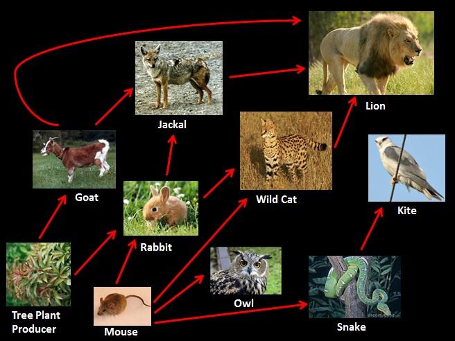 advantages and disadvantages of predator prey relationship